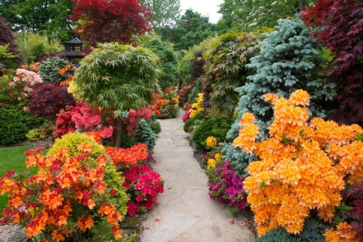 Image result for beautiful flower gardens